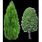 Живые деревья (для посадки)